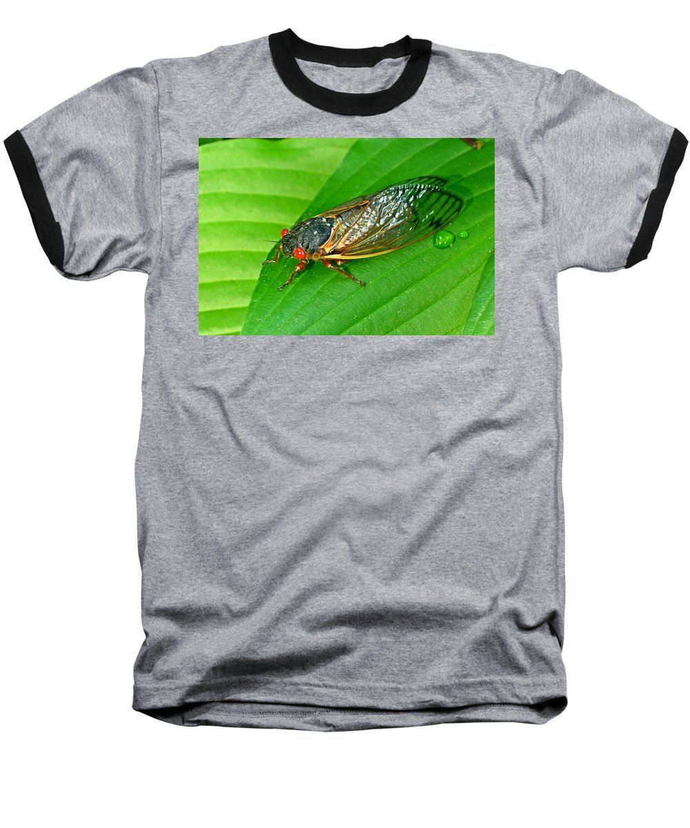 17 Baseball T-Shirt featuring the photograph 17 Year Periodical Cicada by Douglas Barnett