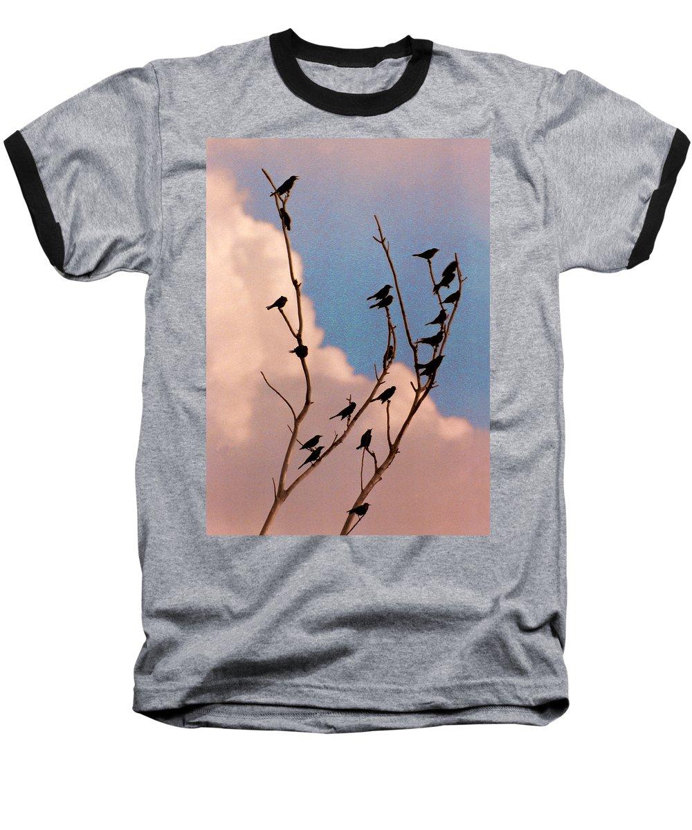 Birds Baseball T-Shirt featuring the photograph 19 Blackbirds by Steve Karol
