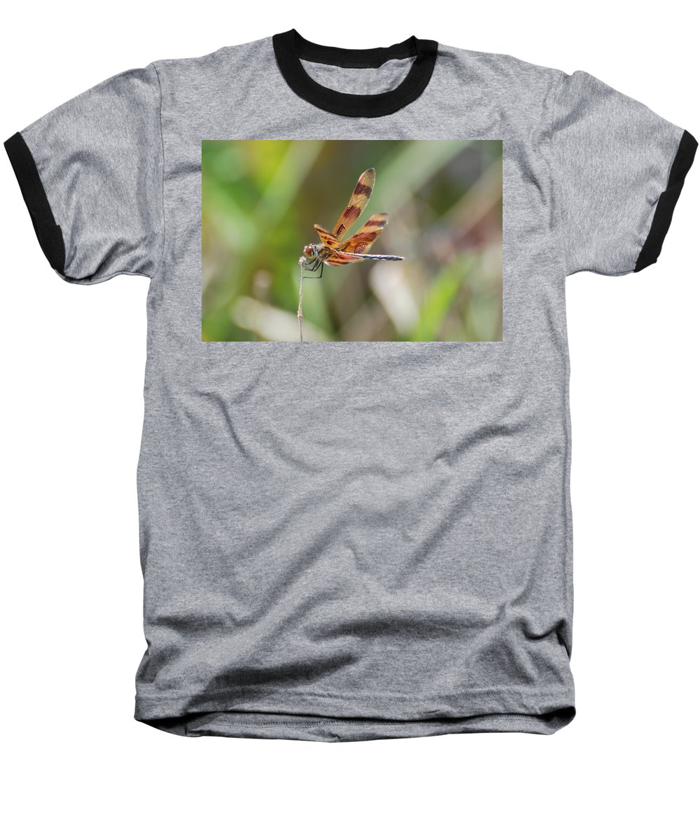 Nature Baseball T-Shirt featuring the photograph Dragon Fly by Rob Hans