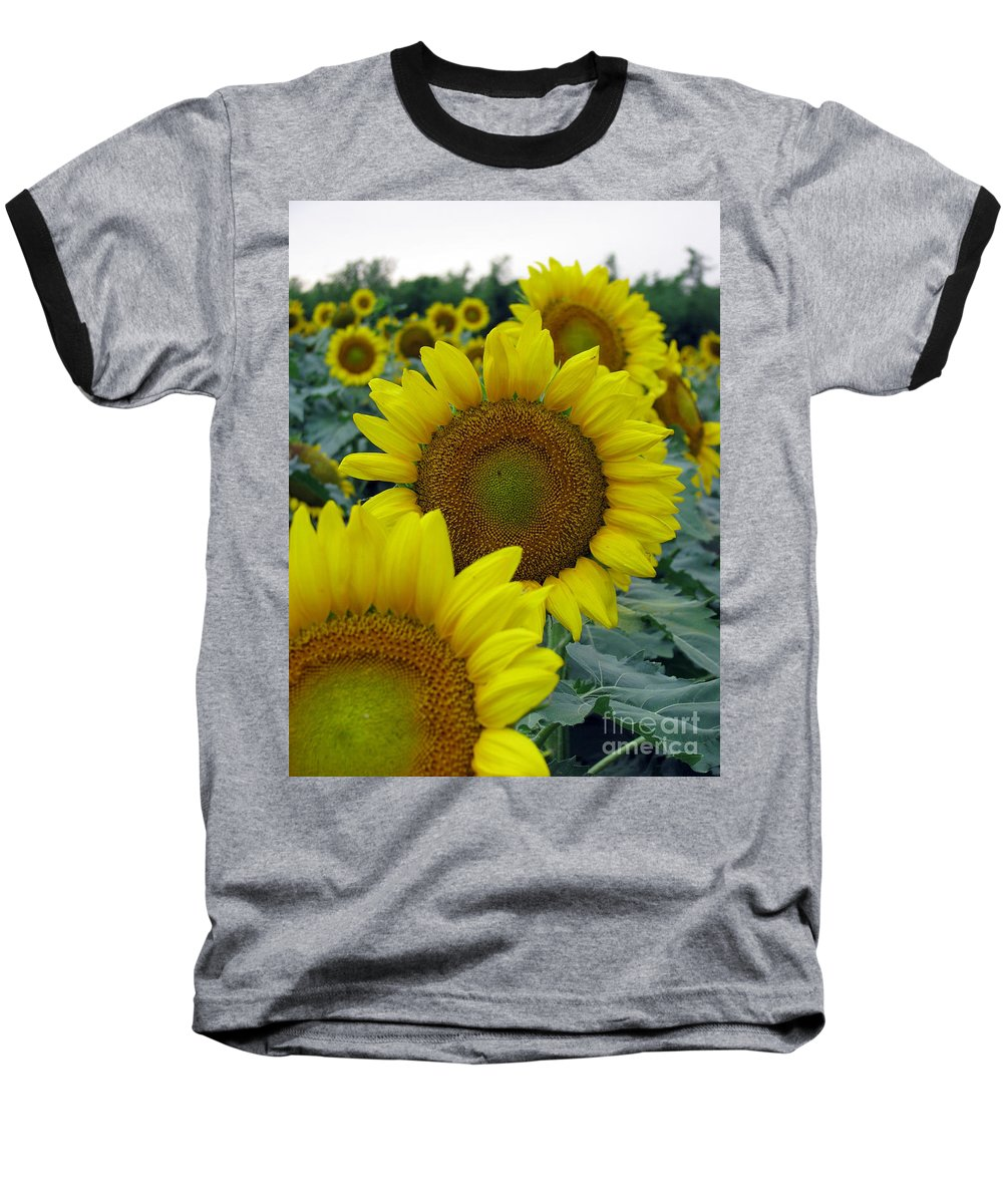 Sunflowers Baseball T-Shirt featuring the photograph Sunflower Series by Amanda Barcon