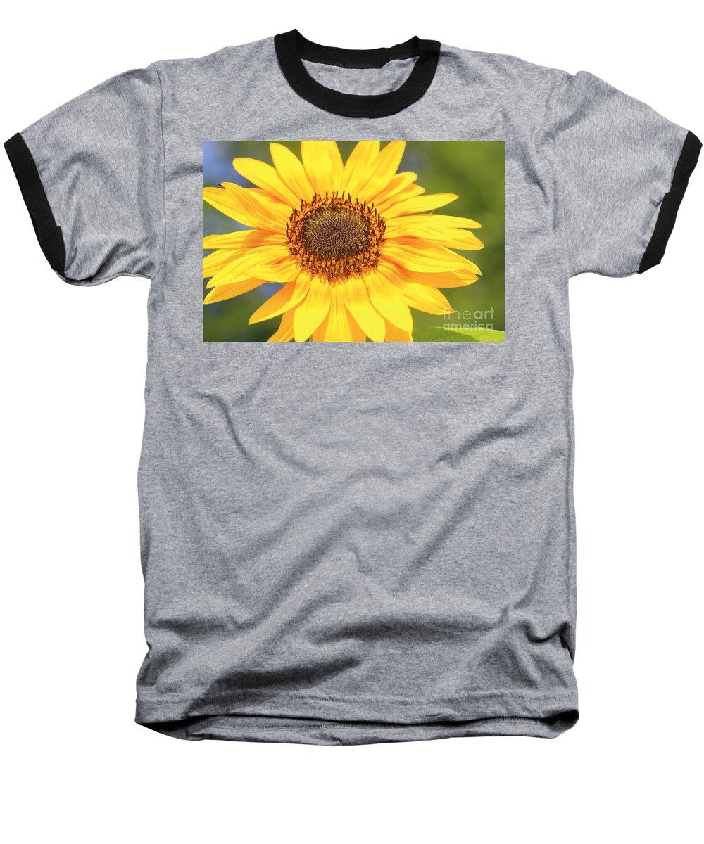 Flower Baseball T-Shirt featuring the photograph Aburst Of Yellow by Robert Pearson