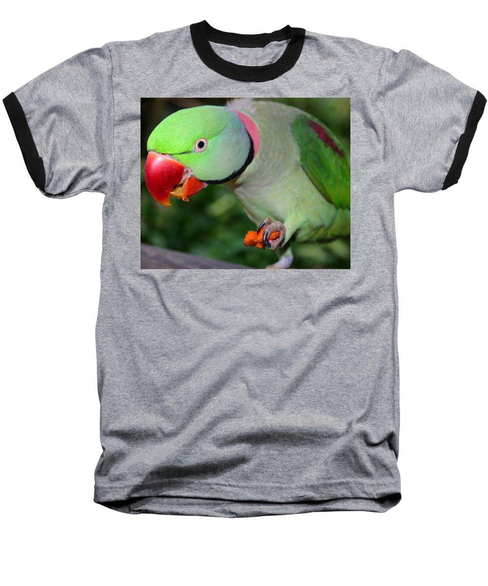 Alexandrine Parrot Baseball T-Shirt featuring the photograph Alexandrine Parrot Feeding by Ralph A Ledergerber-Photography