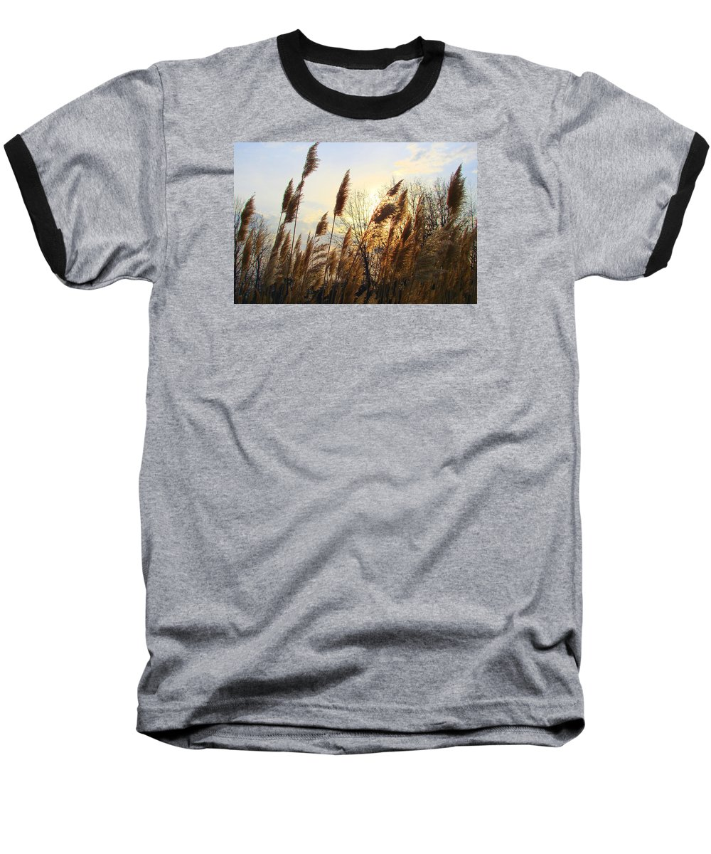 Pampasgrass Baseball T-Shirt featuring the photograph Amber Waves Of Pampas Grass by J R Seymour