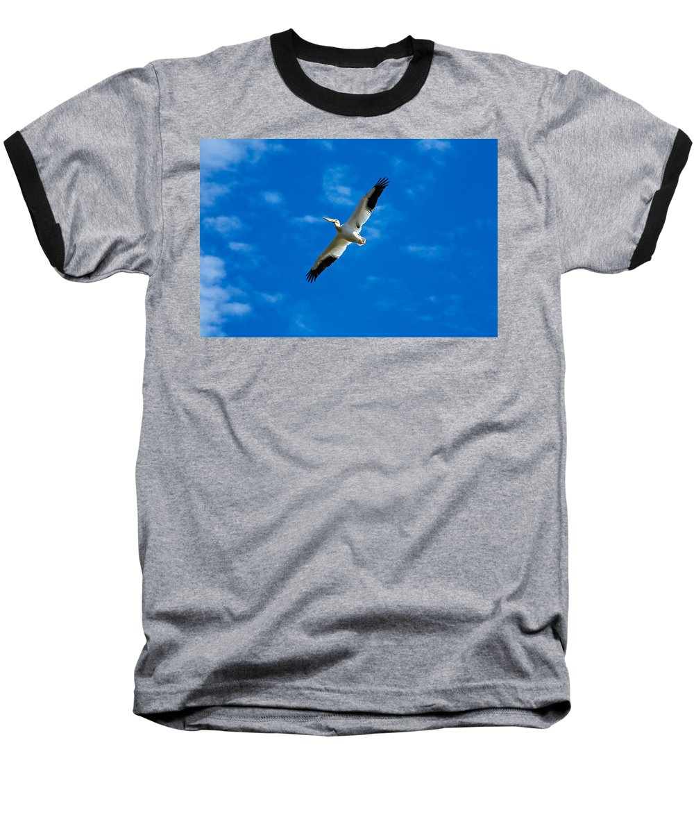 American Baseball T-Shirt featuring the photograph American White Pelican by Marilyn Hunt