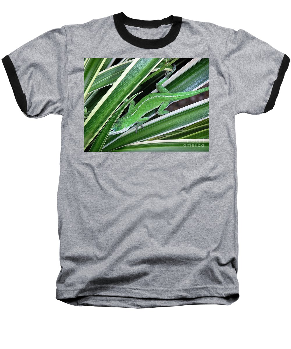 Nature Baseball T-Shirt featuring the photograph Anole Hiding In Spider Plant by Lucyna A M Green