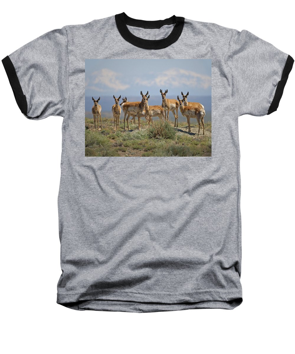 Antelope Baseball T-Shirt featuring the photograph Antelope by Heather Coen