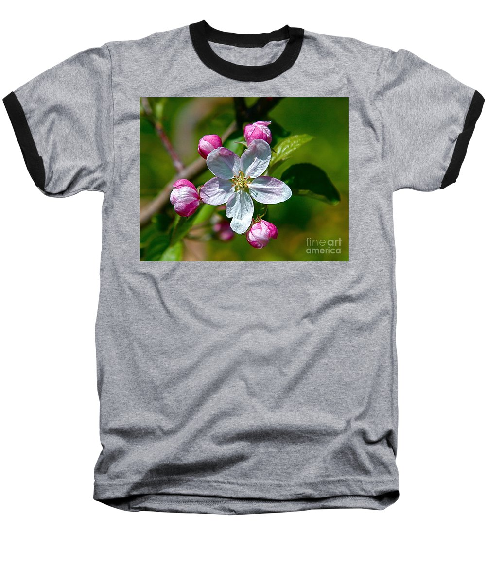 Flower Baseball T-Shirt featuring the photograph Apple Blossom by Robert Pearson