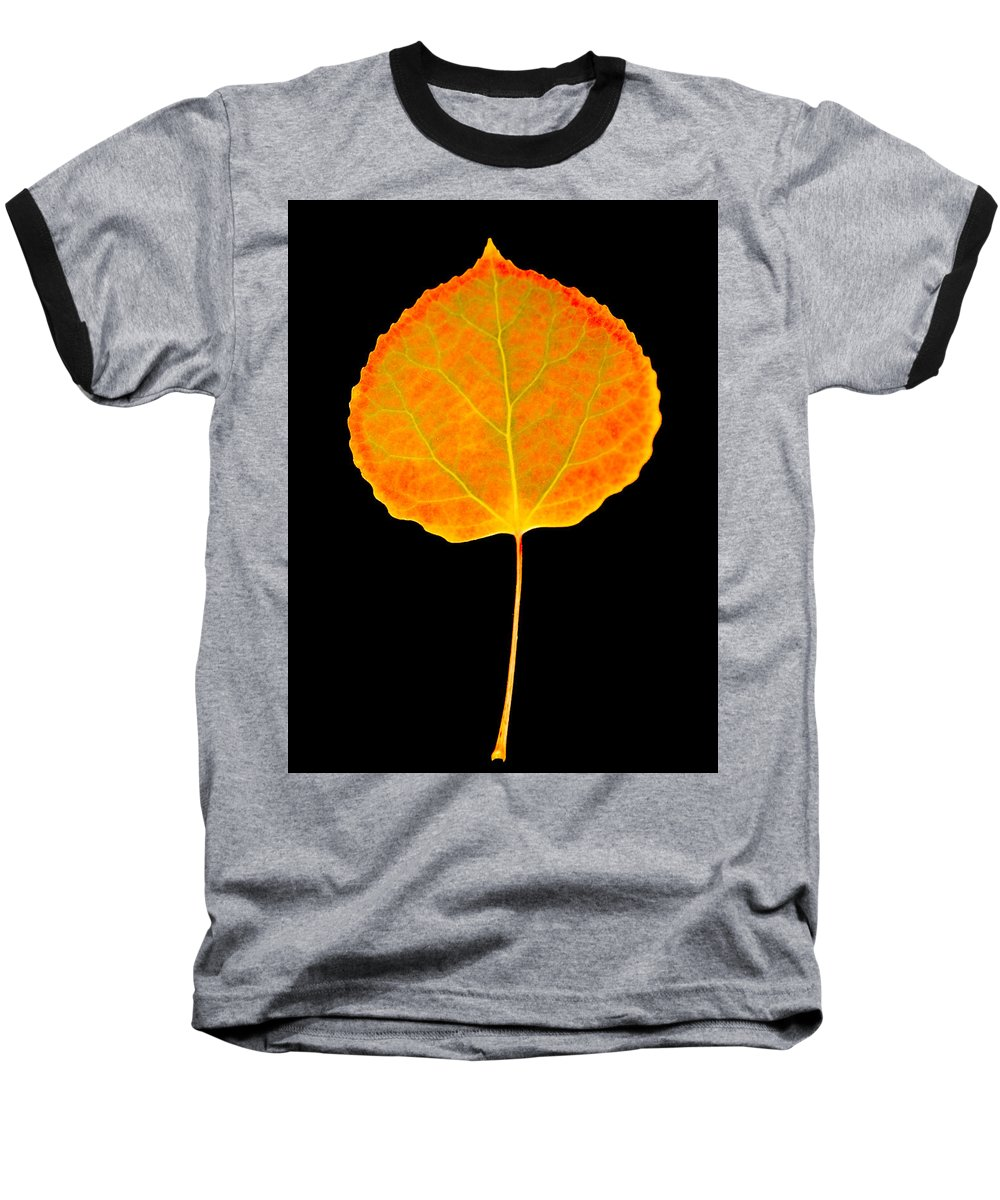 Leaf Baseball T-Shirt featuring the photograph Aspen Leaf by Marilyn Hunt