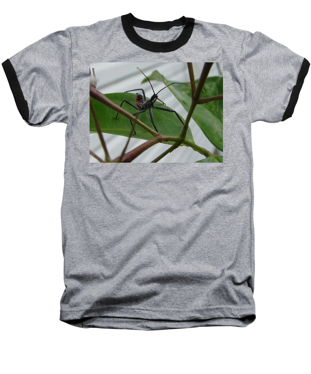 Insect Red Black Green Leaf Baseball T-Shirt featuring the photograph Assassin Bug by Luciana Seymour