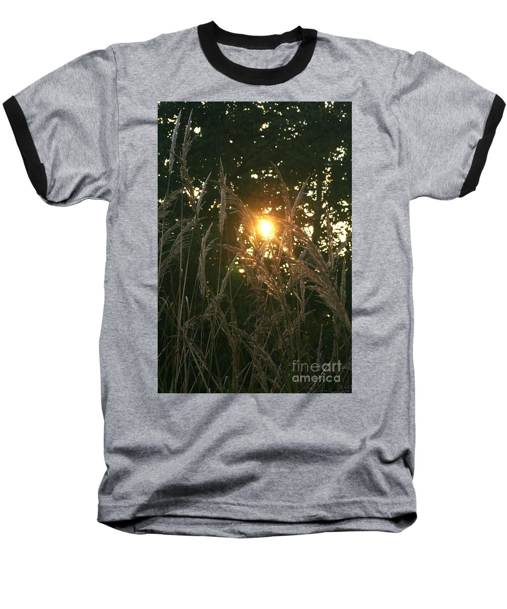 Light Baseball T-Shirt featuring the photograph Autumn Grasses In The Morning by Nadine Rippelmeyer