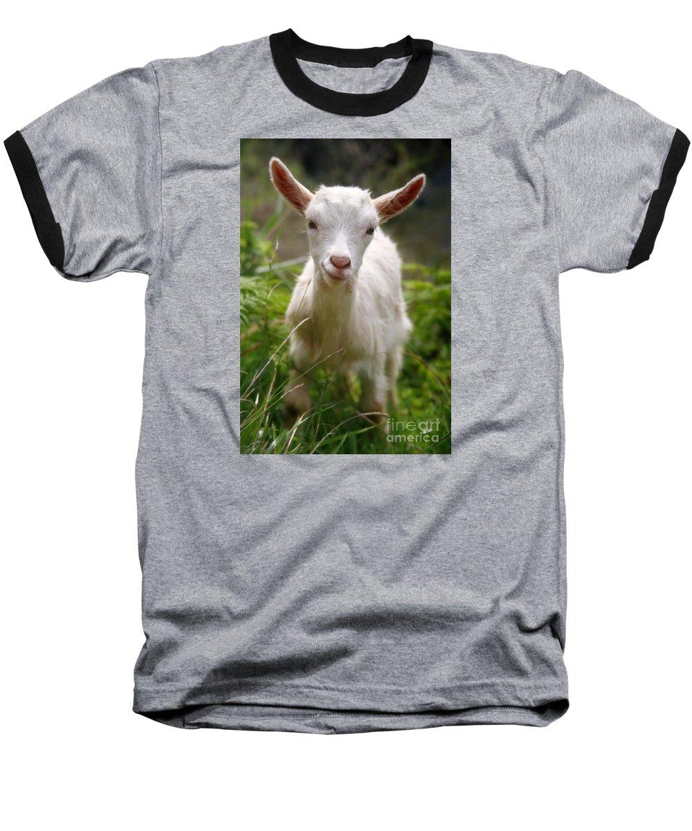 Animals Baseball T-Shirt featuring the photograph Baby Goat by Gaspar Avila