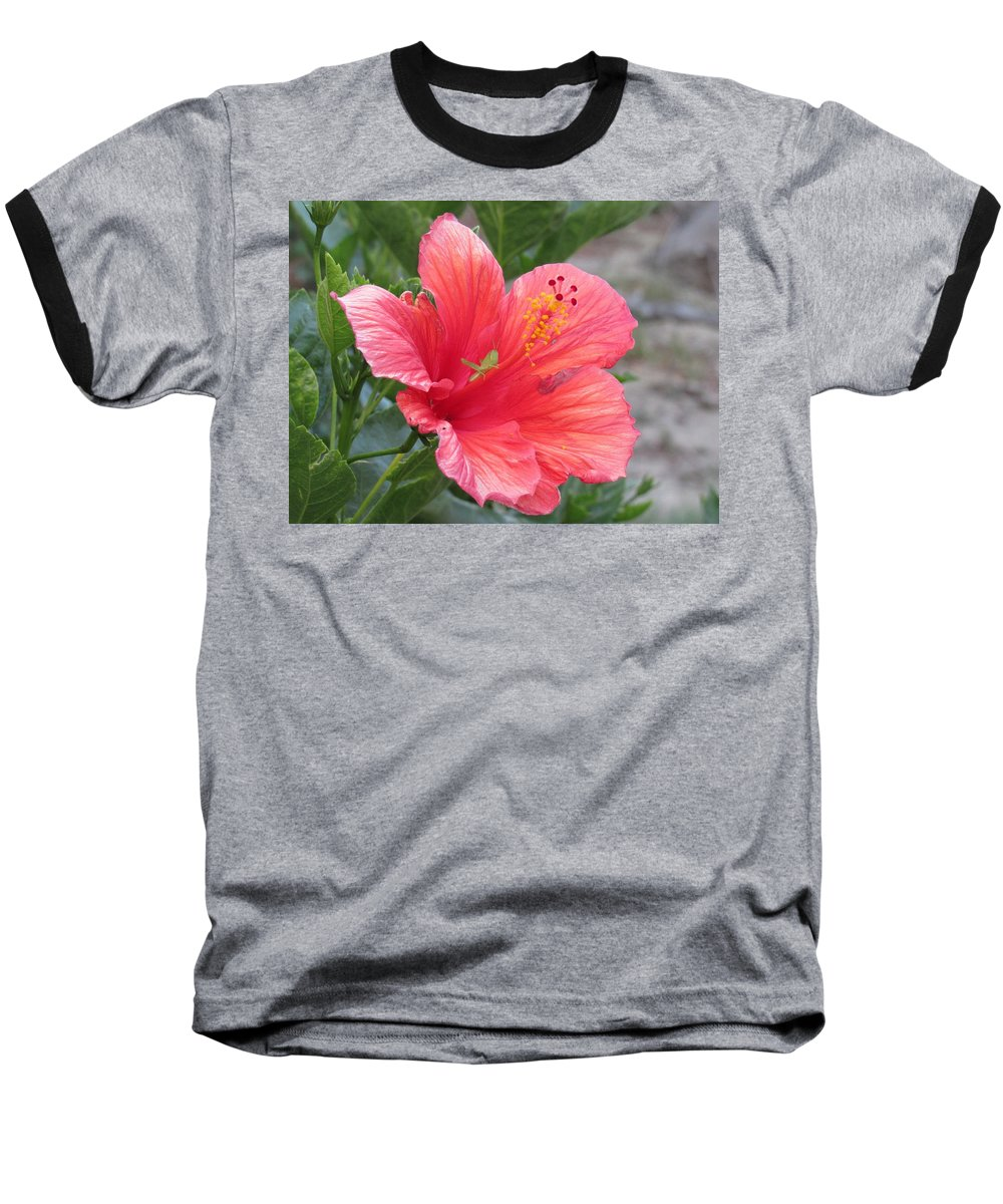 Grasshopper Baseball T-Shirt featuring the photograph Baby Grasshopper On Hibiscus Flower by Nancy Nale