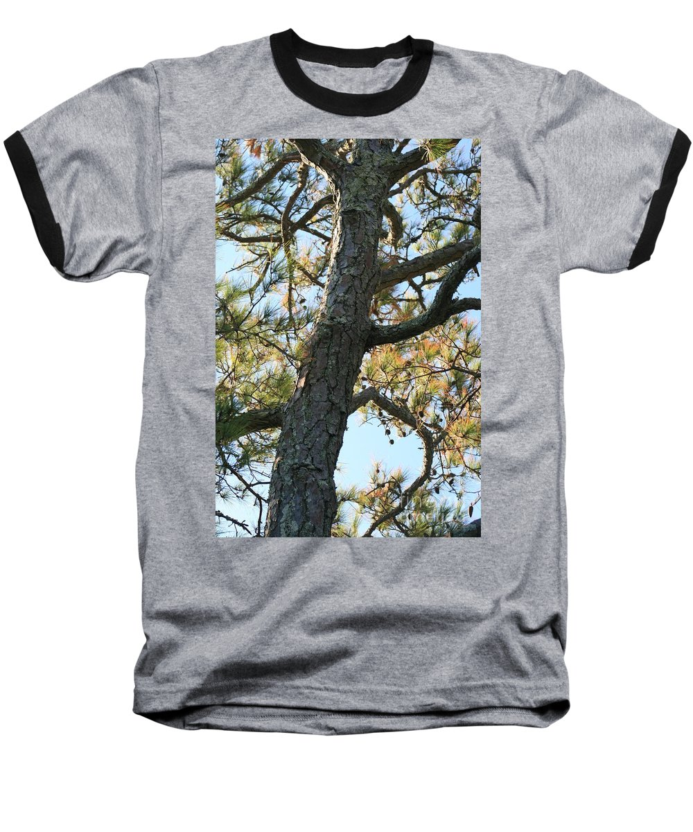 Tree Baseball T-Shirt featuring the photograph Bald Head Tree by Nadine Rippelmeyer