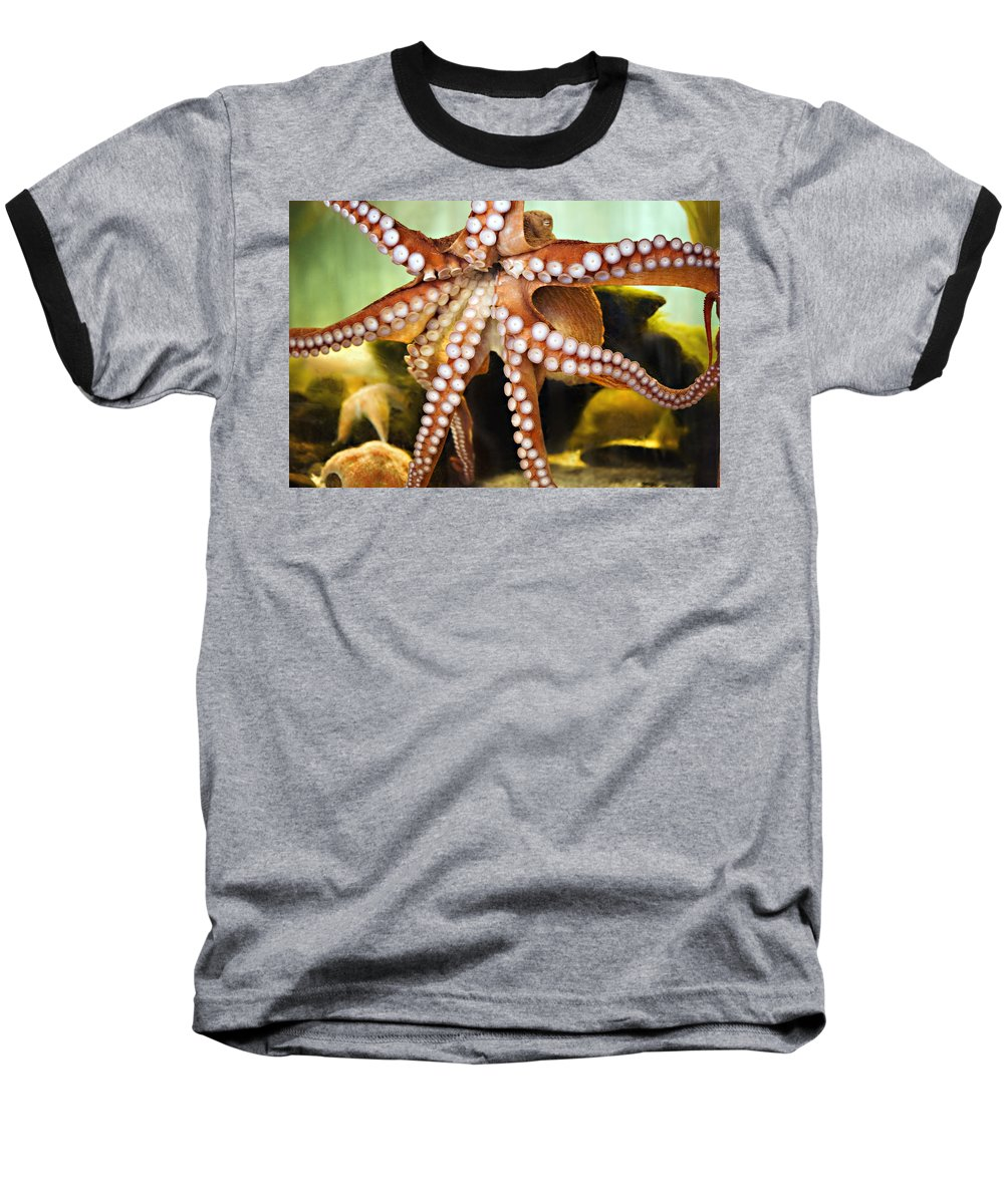 Octopus Baseball T-Shirt featuring the photograph Beautiful Octopus by Marilyn Hunt