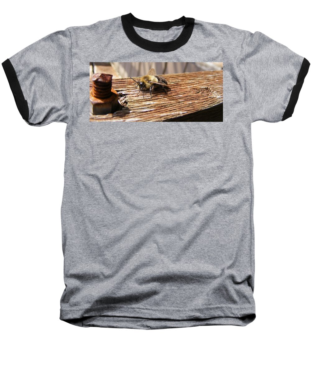 Bee Baseball T-Shirt featuring the photograph Bee-u-tiful by Ed Smith