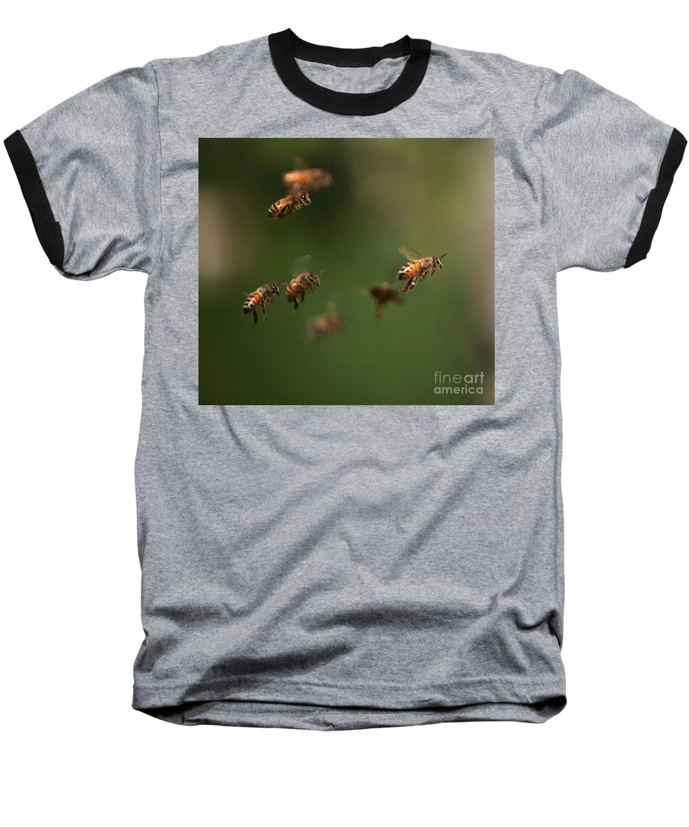 Bee Baseball T-Shirt featuring the photograph Bizzzzzzz by Robert Pearson