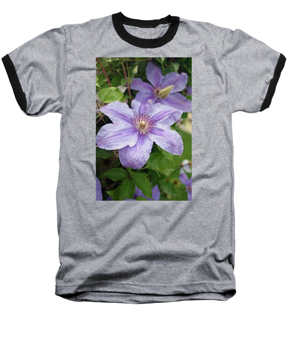 Clematis Baseball T-Shirt featuring the photograph Blue Clematis by Margie Wildblood