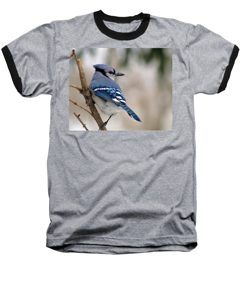 Blue Jay Baseball T-Shirt featuring the photograph Blue Jay by Gaby Swanson