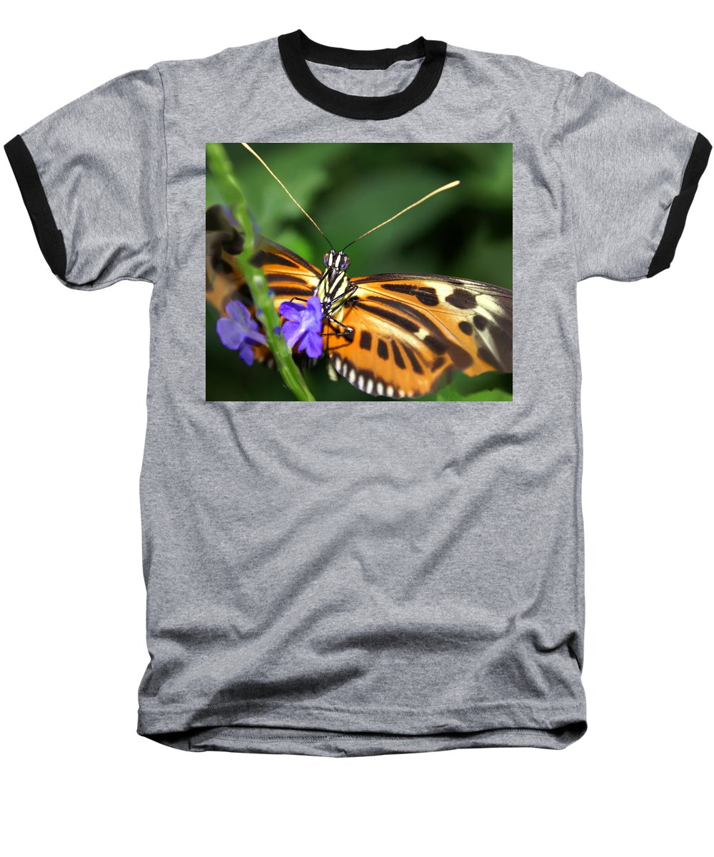 Butterfly Baseball T-Shirt featuring the photograph Butterfly 2 Eucides Isabella by Heather Coen
