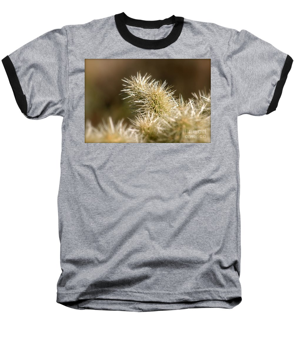 Cactus Baseball T-Shirt featuring the photograph Cacti by Nadine Rippelmeyer