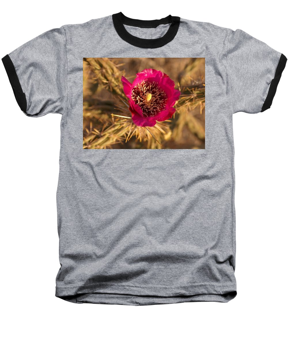 Cactus Flowers Wildflowers Baseball T-Shirt featuring the photograph Cactus Flower 1 by Tim McCarthy