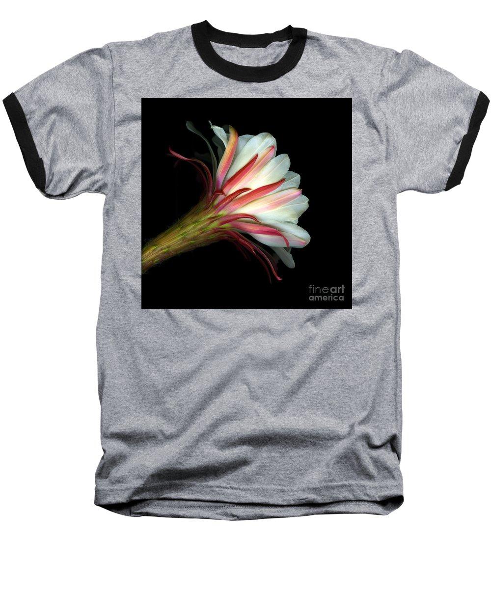 Scanart Baseball T-Shirt featuring the photograph Cactus Flower by Christian Slanec