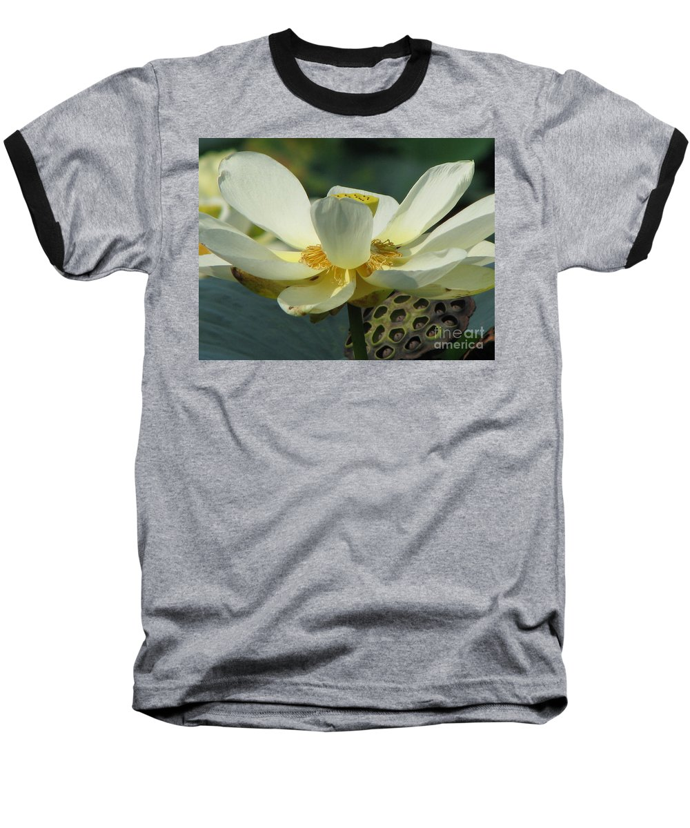 Lotus Baseball T-Shirt featuring the photograph Calm by Amanda Barcon