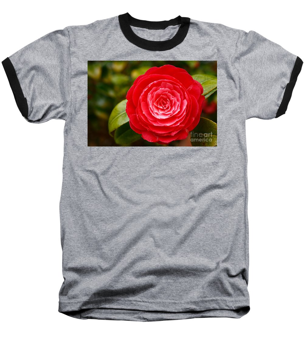 Azores Baseball T-Shirt featuring the photograph Camellia Japonica by Gaspar Avila
