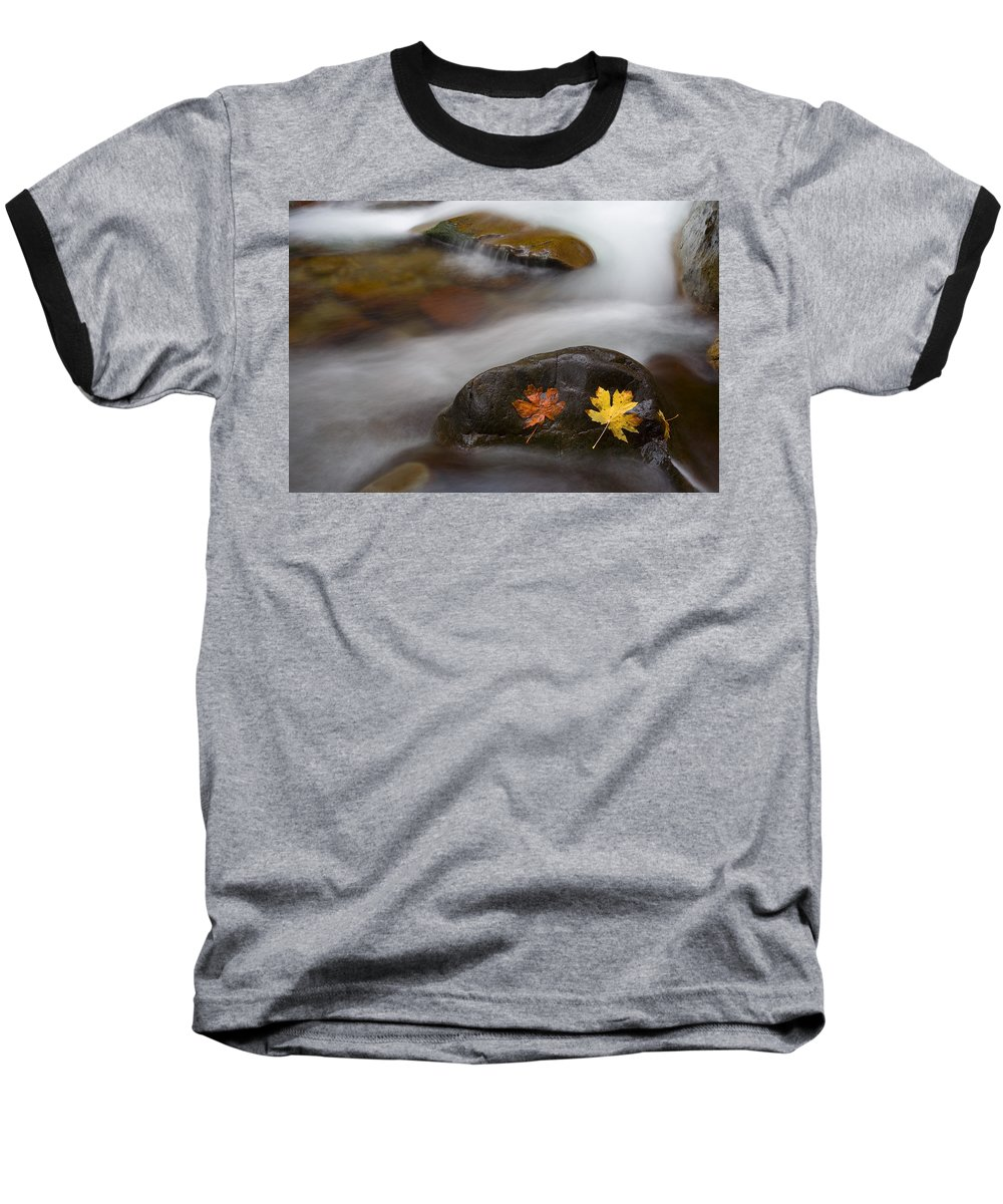 Leaves Baseball T-Shirt featuring the photograph Castaways by Mike Dawson