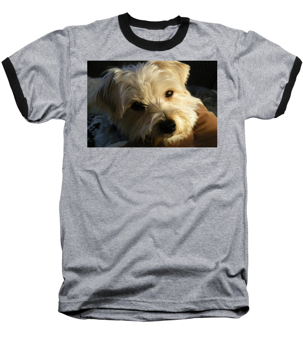 Dog Baseball T-Shirt featuring the photograph Charlie by Ed Smith