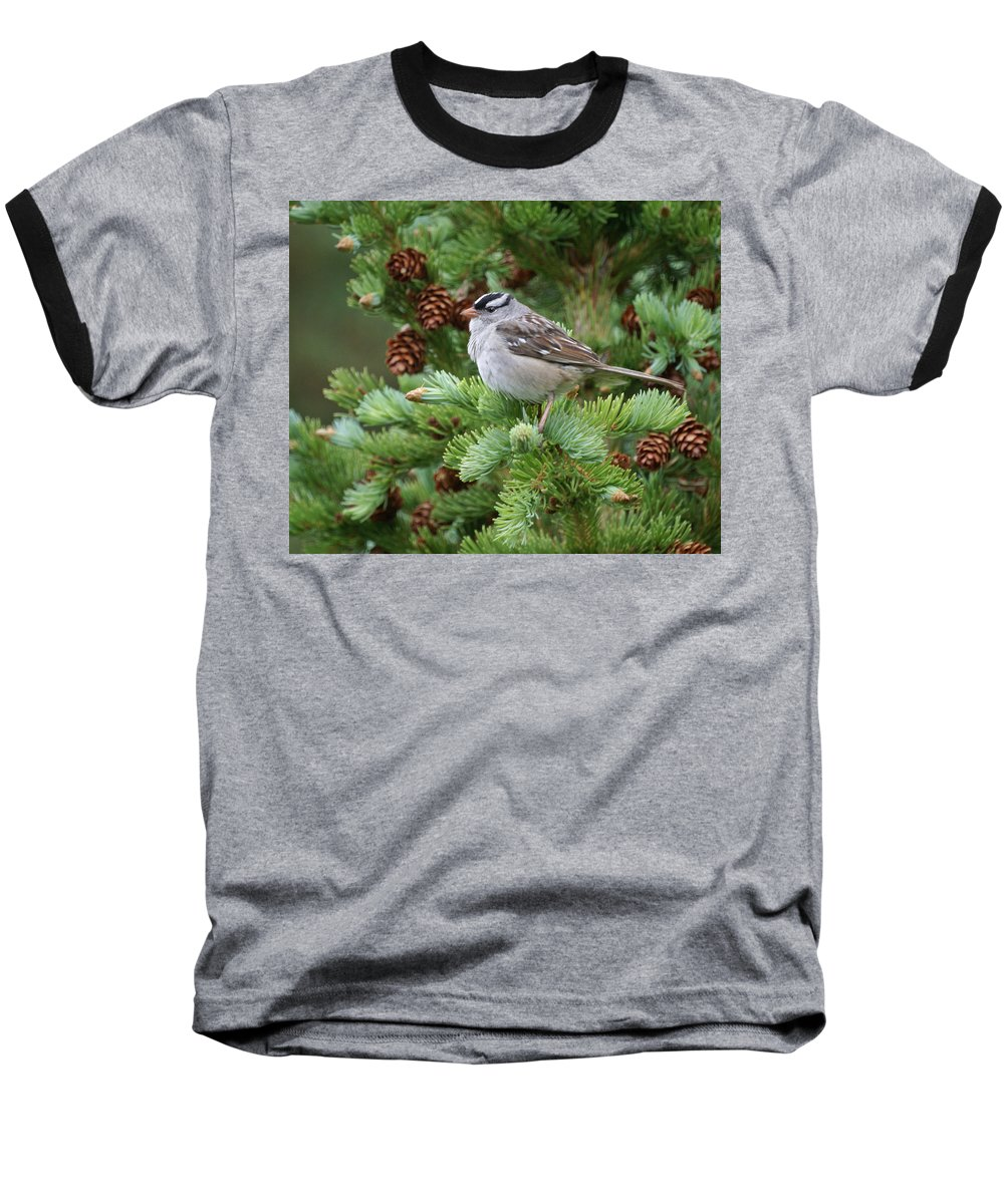 Chickadee Baseball T-Shirt featuring the photograph Chickadee by Heather Coen