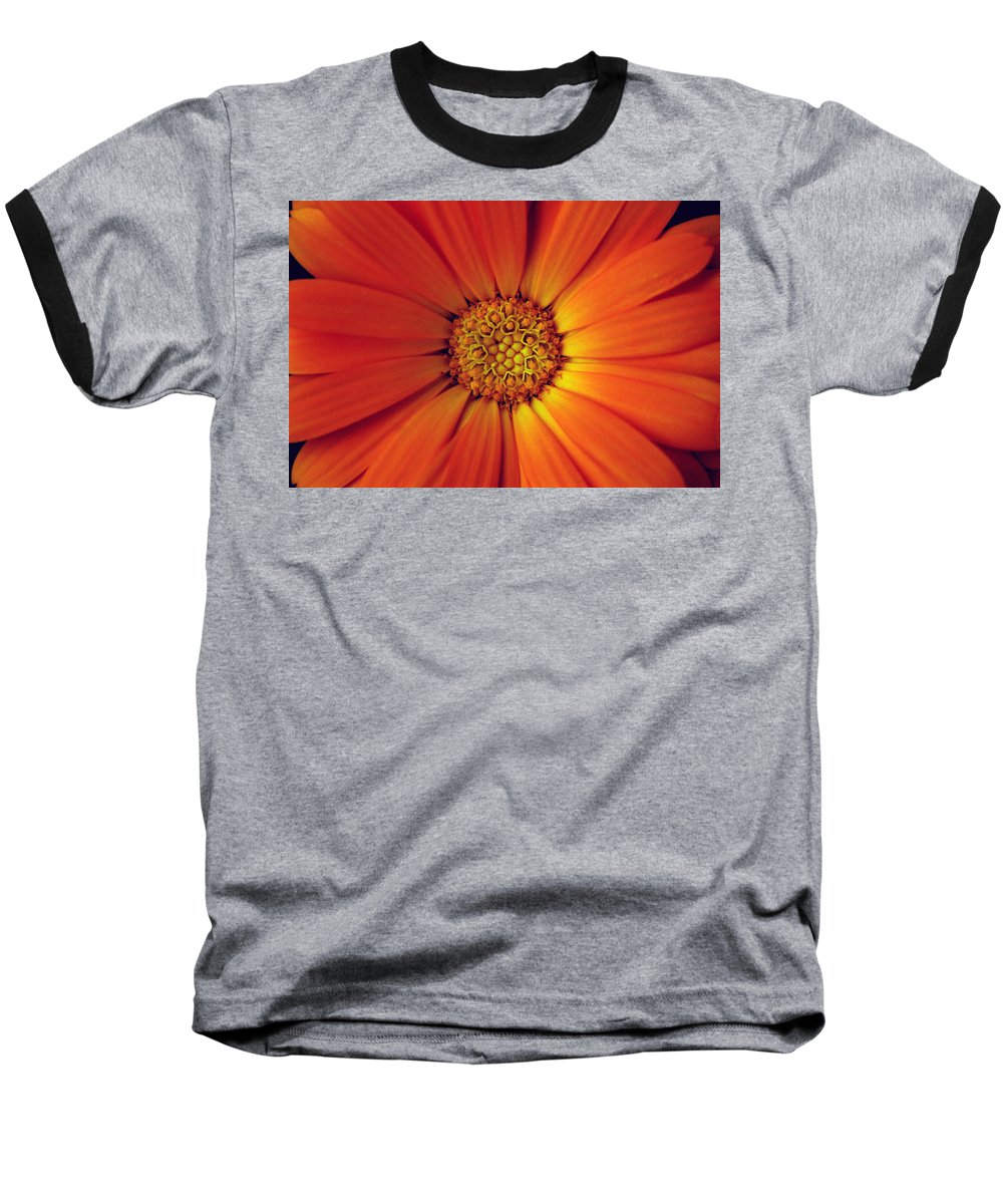 Plant Baseball T-Shirt featuring the photograph Close Up Of An Orange Daisy by Ralph A Ledergerber-Photography