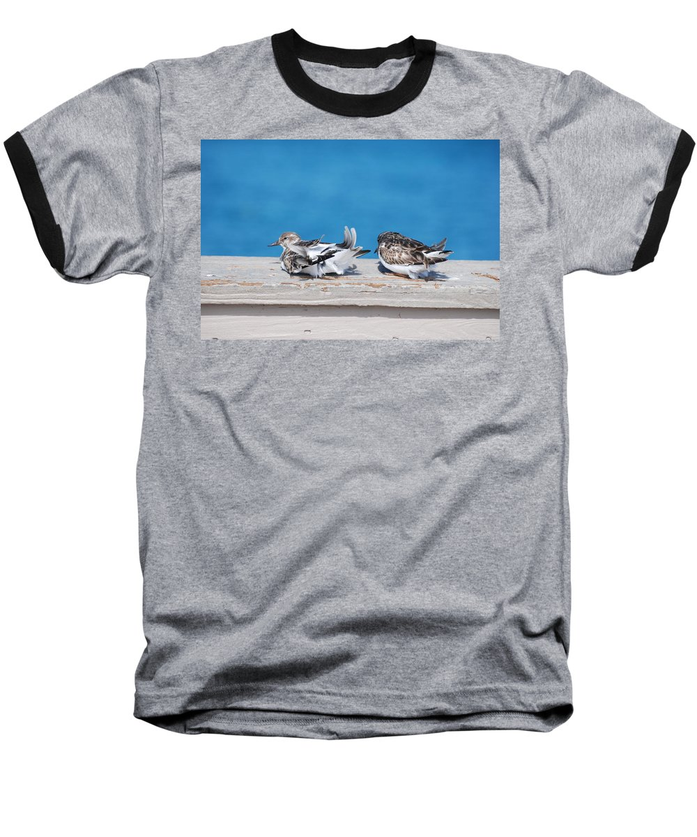 Bird Baseball T-Shirt featuring the photograph Cold Birds by Rob Hans