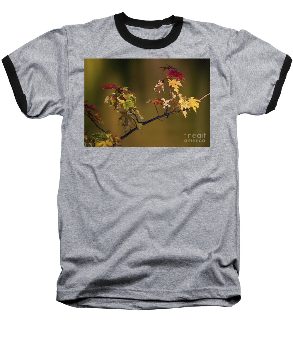 Fall Baseball T-Shirt featuring the photograph Color On A Stick by Robert Pearson