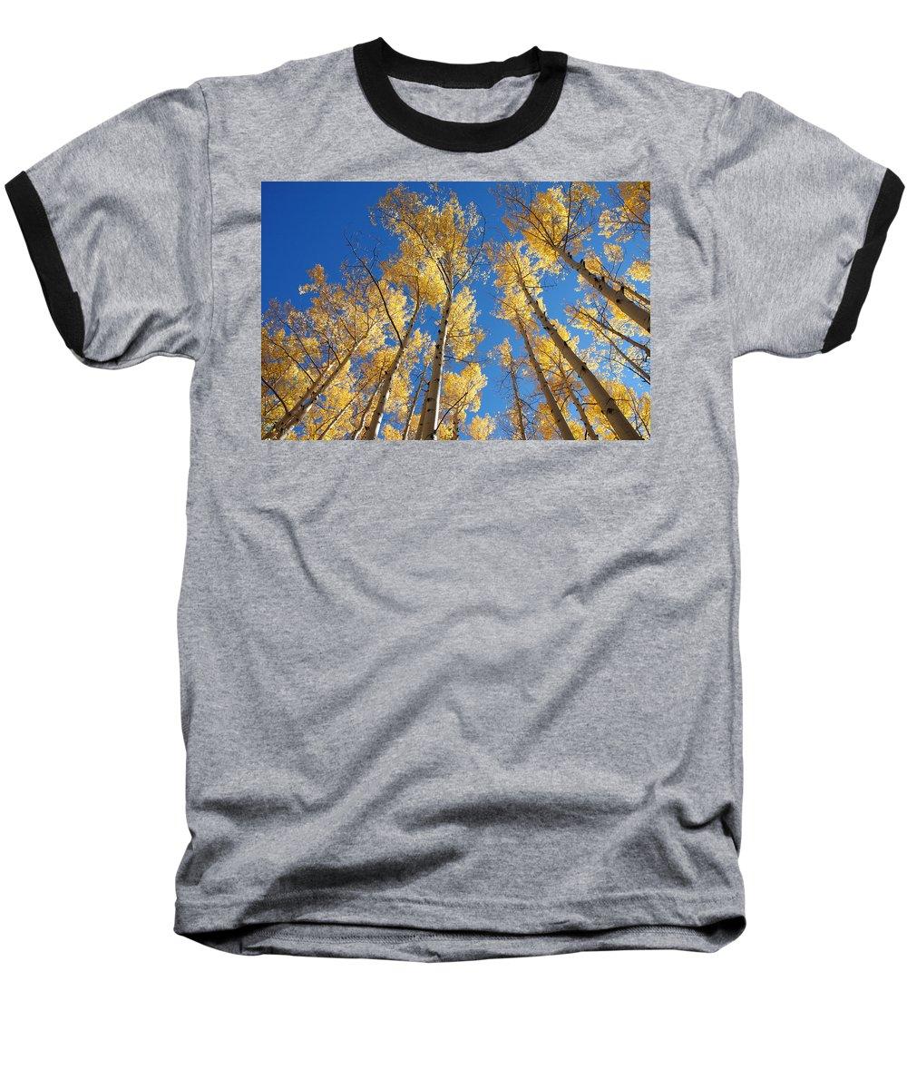 Aspen Baseball T-Shirt featuring the photograph Colorado Aspen by Jerry McElroy