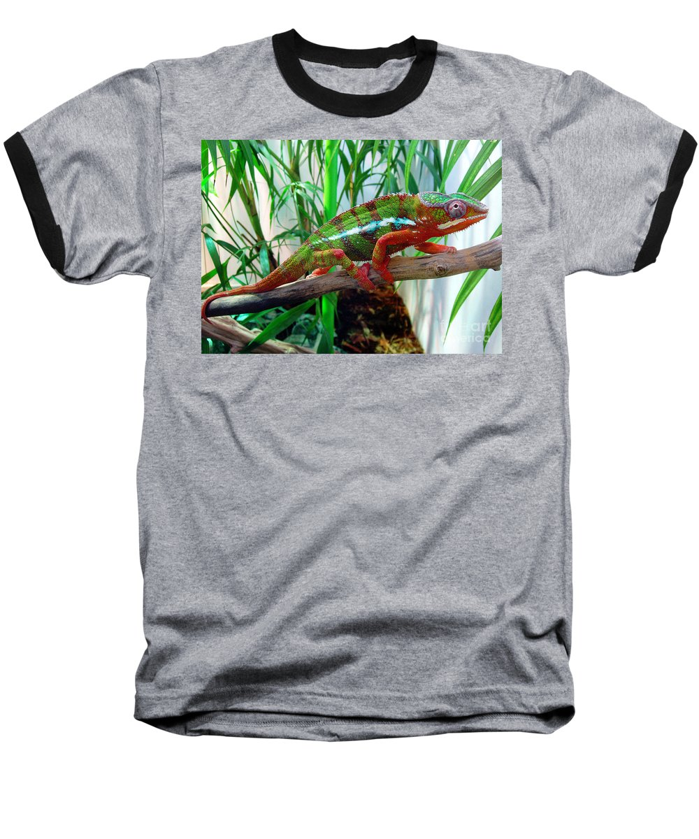 Chameleon Baseball T-Shirt featuring the photograph Colorful Chameleon by Nancy Mueller