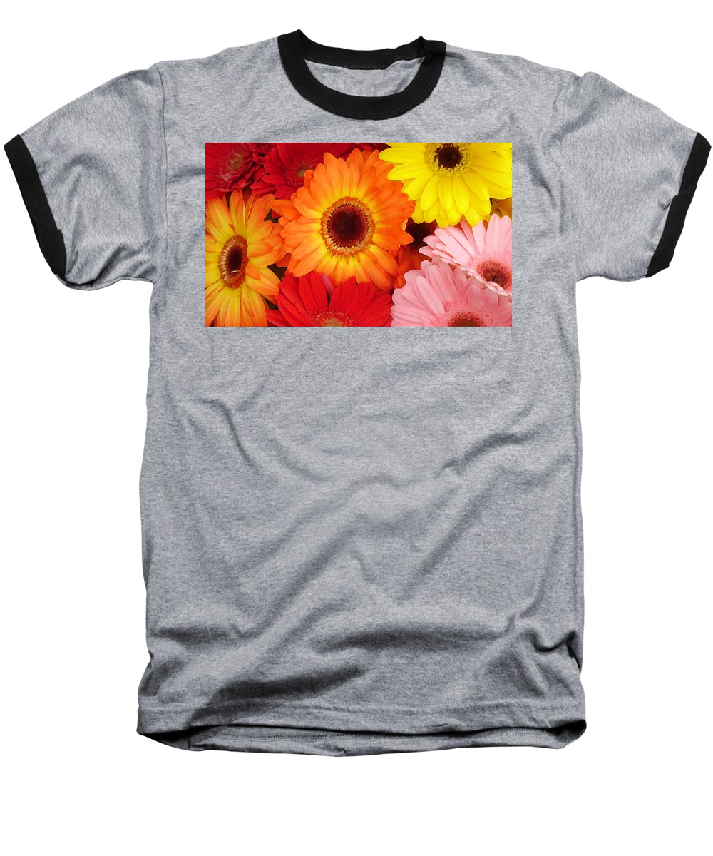 Gerber Daisy Baseball T-Shirt featuring the painting Colorful Gerber Daisies by Amy Vangsgard