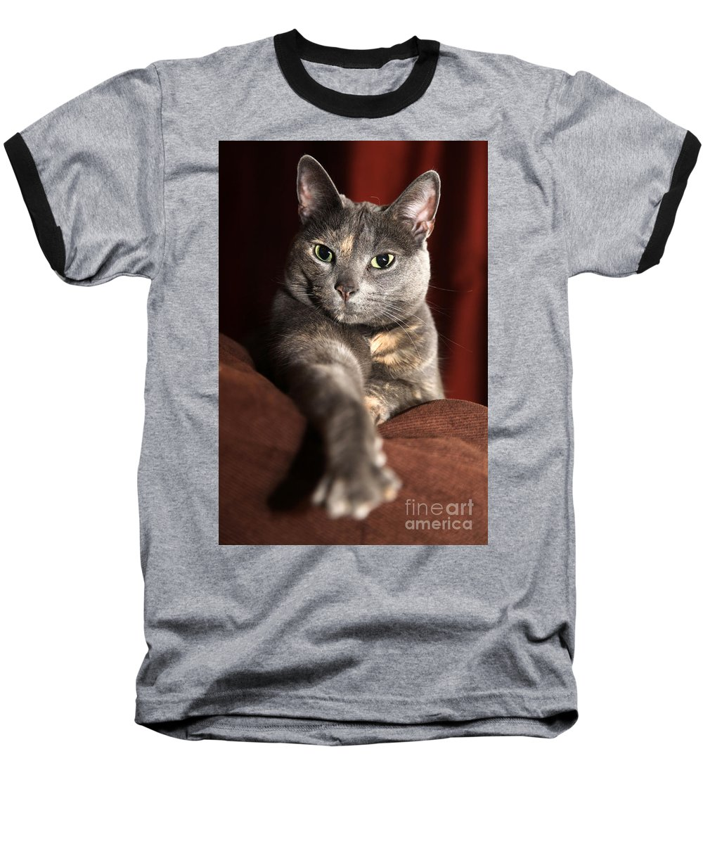 Kitty Baseball T-Shirt featuring the photograph Come Here by Amanda Barcon