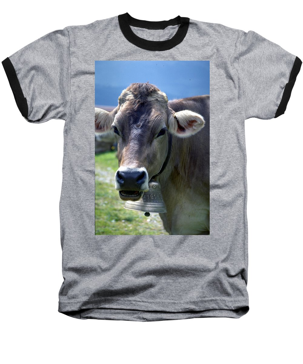 Cow Baseball T-Shirt featuring the photograph Cow by Flavia Westerwelle