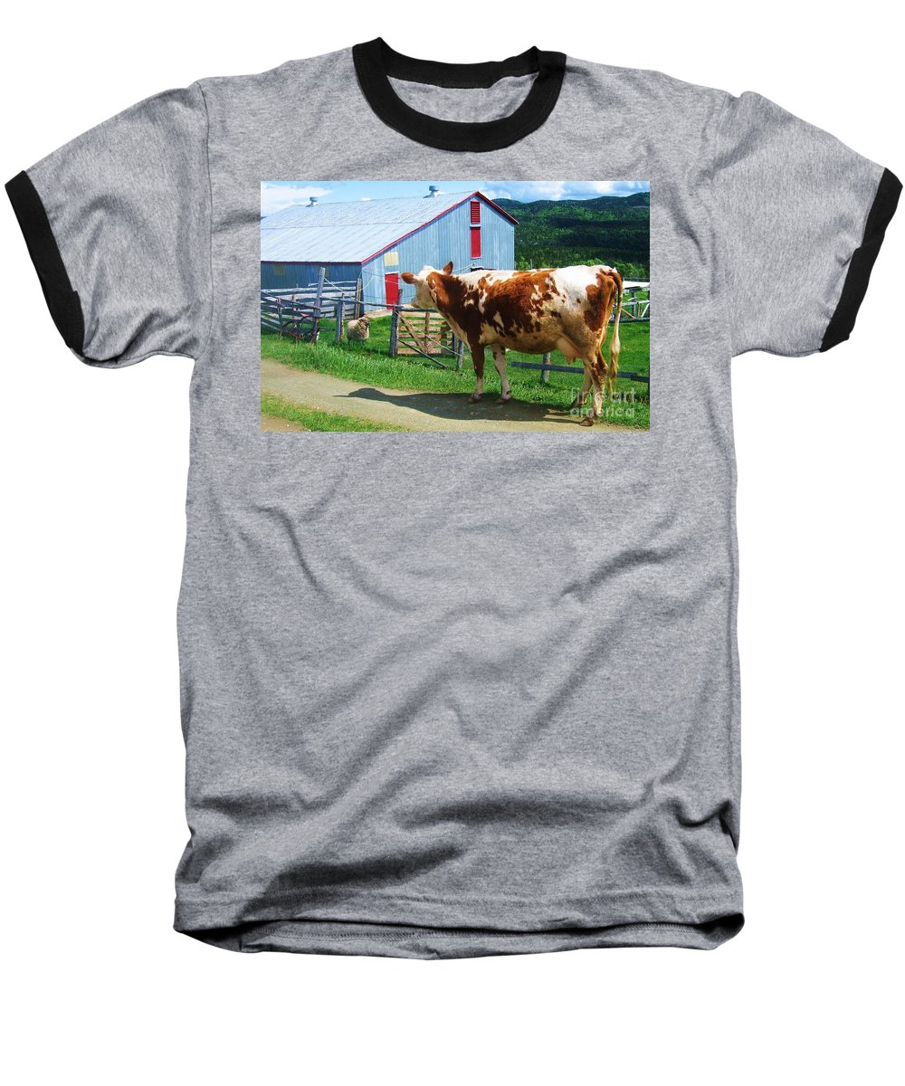 Photograph Cow Sheep Barn Field Newfoundland Baseball T-Shirt featuring the photograph Cow Sheep And Bicycle by Seon-Jeong Kim