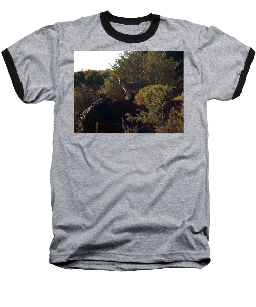 Coyote Baseball T-Shirt featuring the photograph Coyote At The Petrogyphs 2 by Tim McCarthy