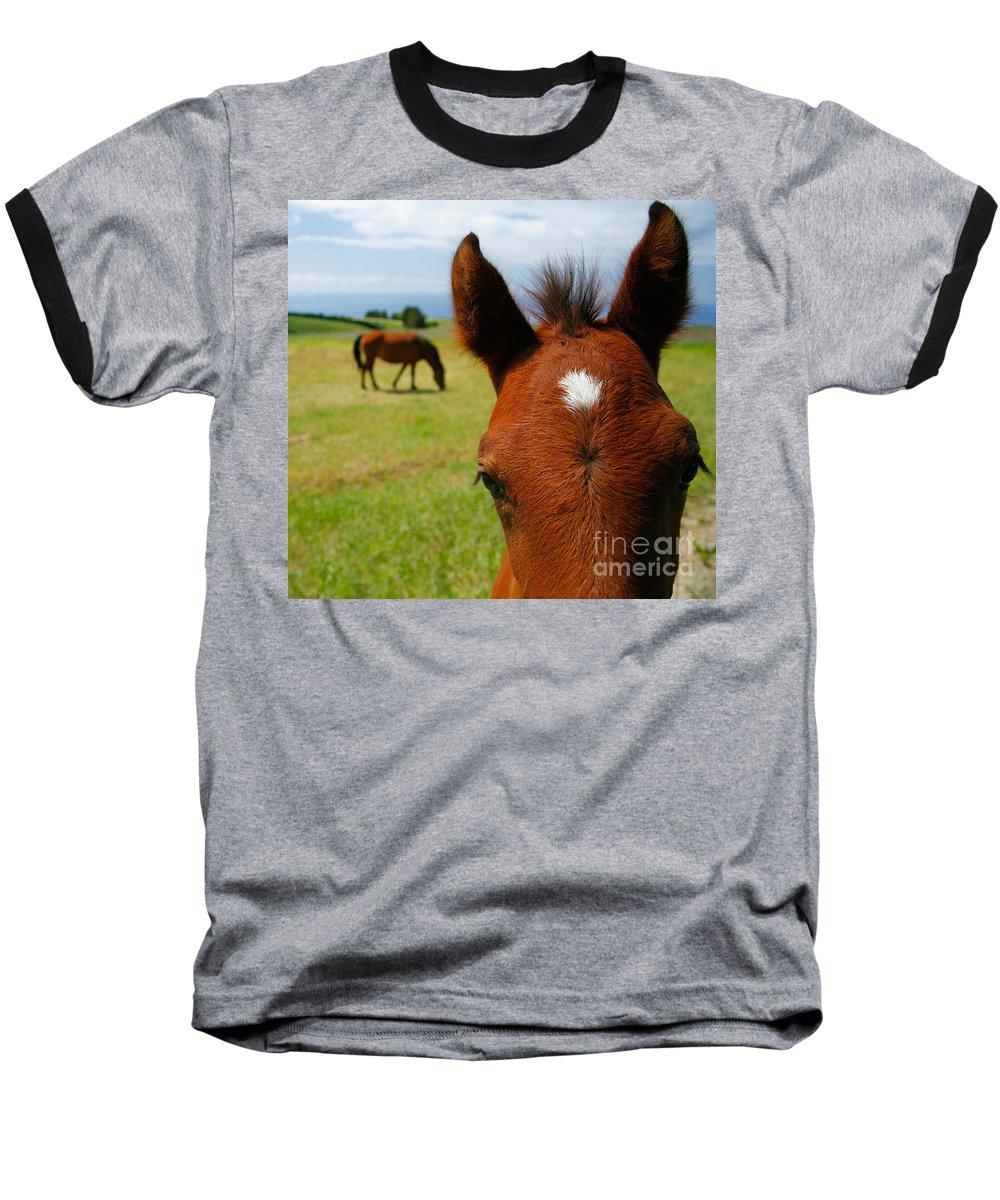 Farm Baseball T-Shirt featuring the photograph Curious Colt by Gaspar Avila