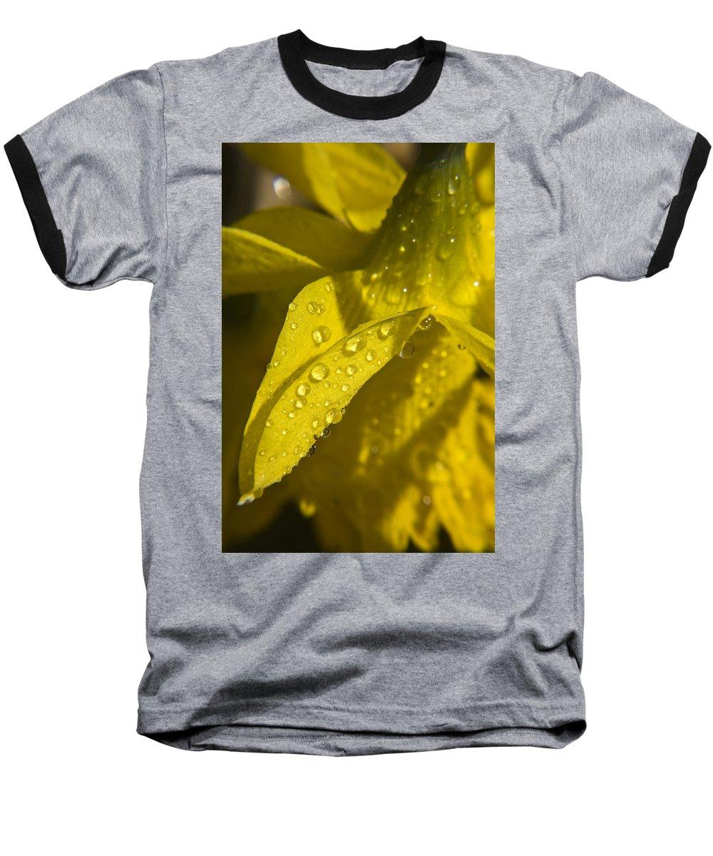 Daffodil Baseball T-Shirt featuring the photograph Daffodil Dew by Teresa Mucha