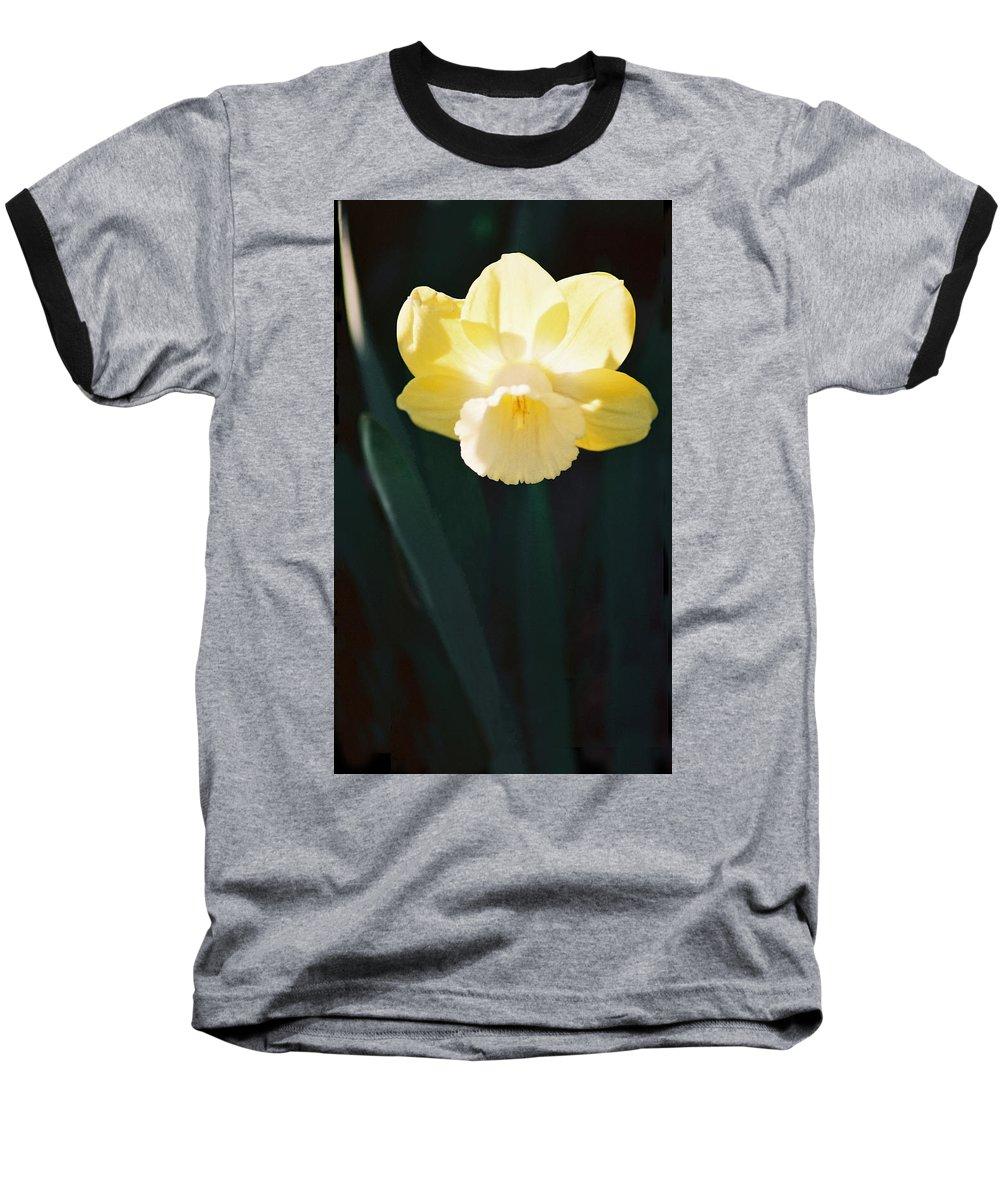Daffodil Baseball T-Shirt featuring the photograph Daffodil by Steve Karol