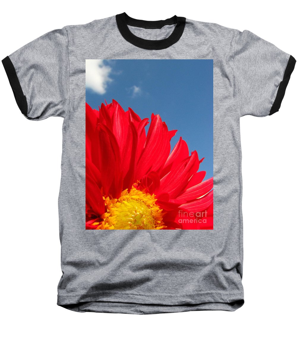 Dahlia Baseball T-Shirt featuring the photograph Dahlia by Amanda Barcon