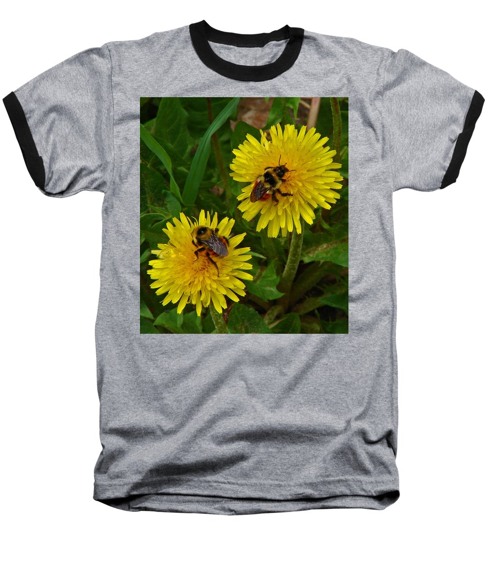 Dandelion Baseball T-Shirt featuring the photograph Dandelions And Bees by Heather Coen
