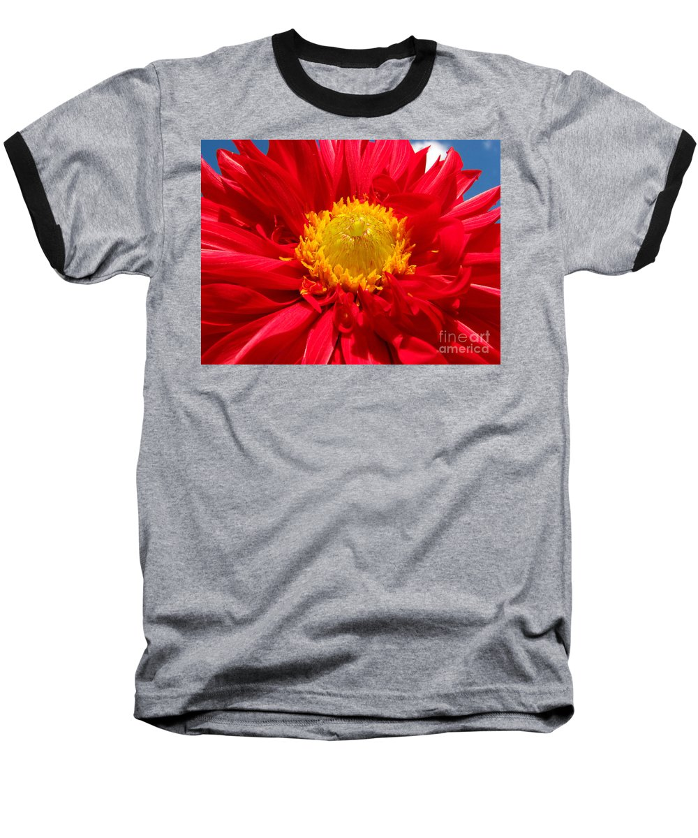 Dhalia Baseball T-Shirt featuring the photograph Dhalia by Amanda Barcon