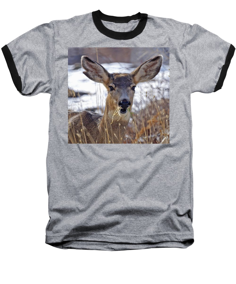 Doe Baseball T-Shirt featuring the photograph Doe by Heather Coen