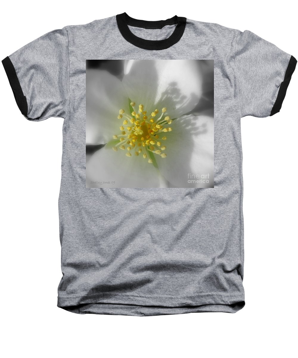 Photography Baseball T-Shirt featuring the photograph Dogwood by Shelley Jones