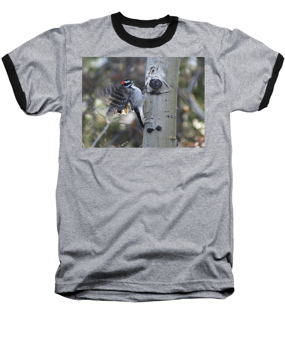 Woodpecker Baseball T-Shirt featuring the photograph Downy Woodpecker by Heather Coen